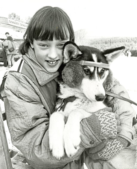 1988: Earmuffs from owner Kerry Warburton helped six-month-old husky Tasha ward off chilly Cairngorm winds at the Siberian Husky Club of Great Britain snow rally practice sessions
