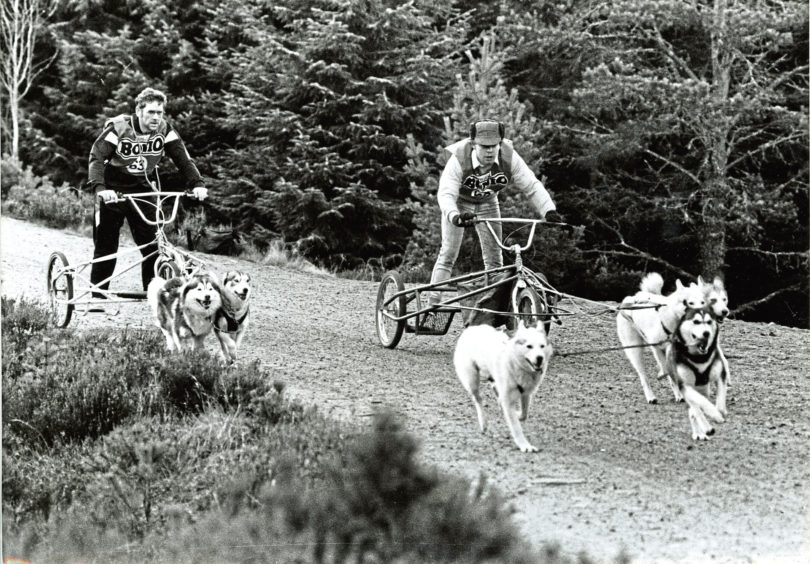 1989: Siberian Husky Club of Great Britain members Chris Anderson, of Peterhead, and Mark Nunn, of Oxford, have a practice run near Glenmore