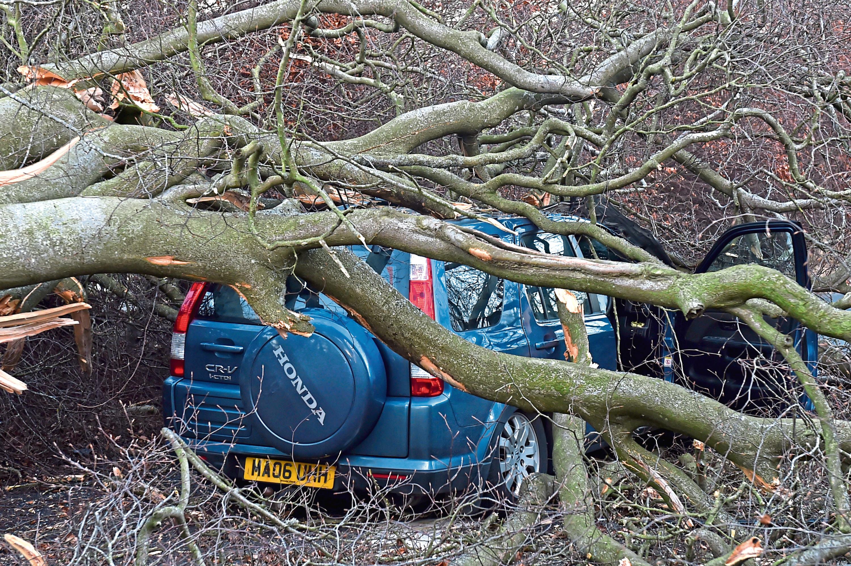 A Honda CRV was hit by a fallen tree near Drumoak