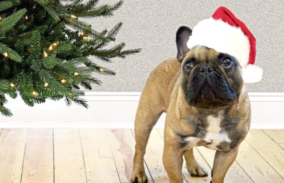 Colleagues at the Aberdeen Pets at Home raised £5,079 for the Support Adoption for Pets annual Santa Paws appeal
