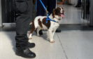 Sniffer dogs were used to detect drugs on pupils going to Lochside Academy