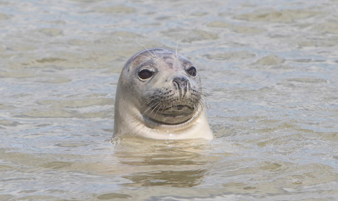 The noises were thought to be coming from a seal