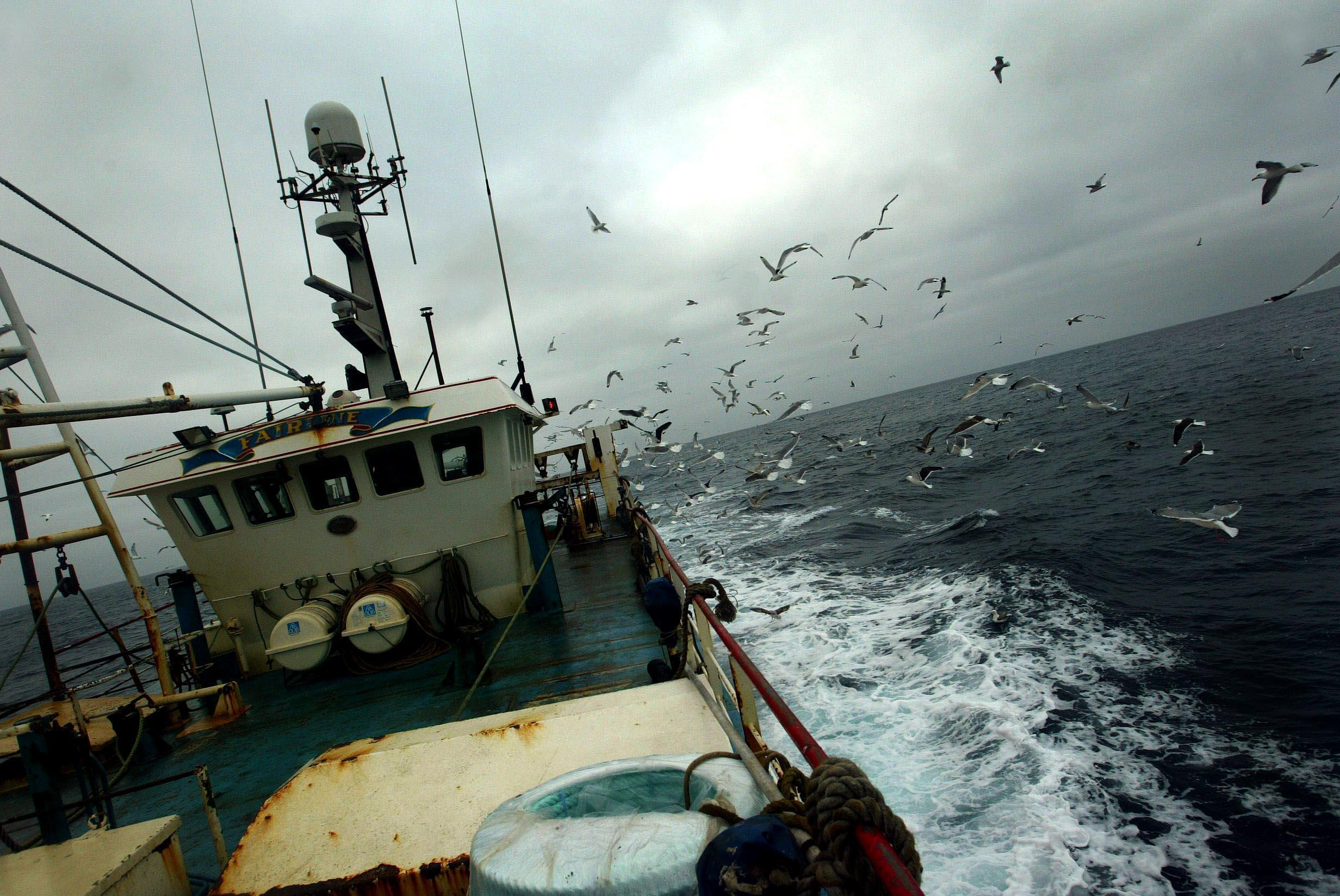 The amount of cod which can be caught is to be reduced dramatically