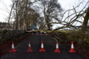 A large tree blocking Craigton Road yesterday