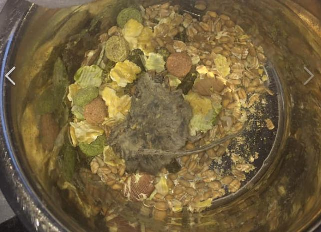 The dead mouse was found in pet food bought from Poundland