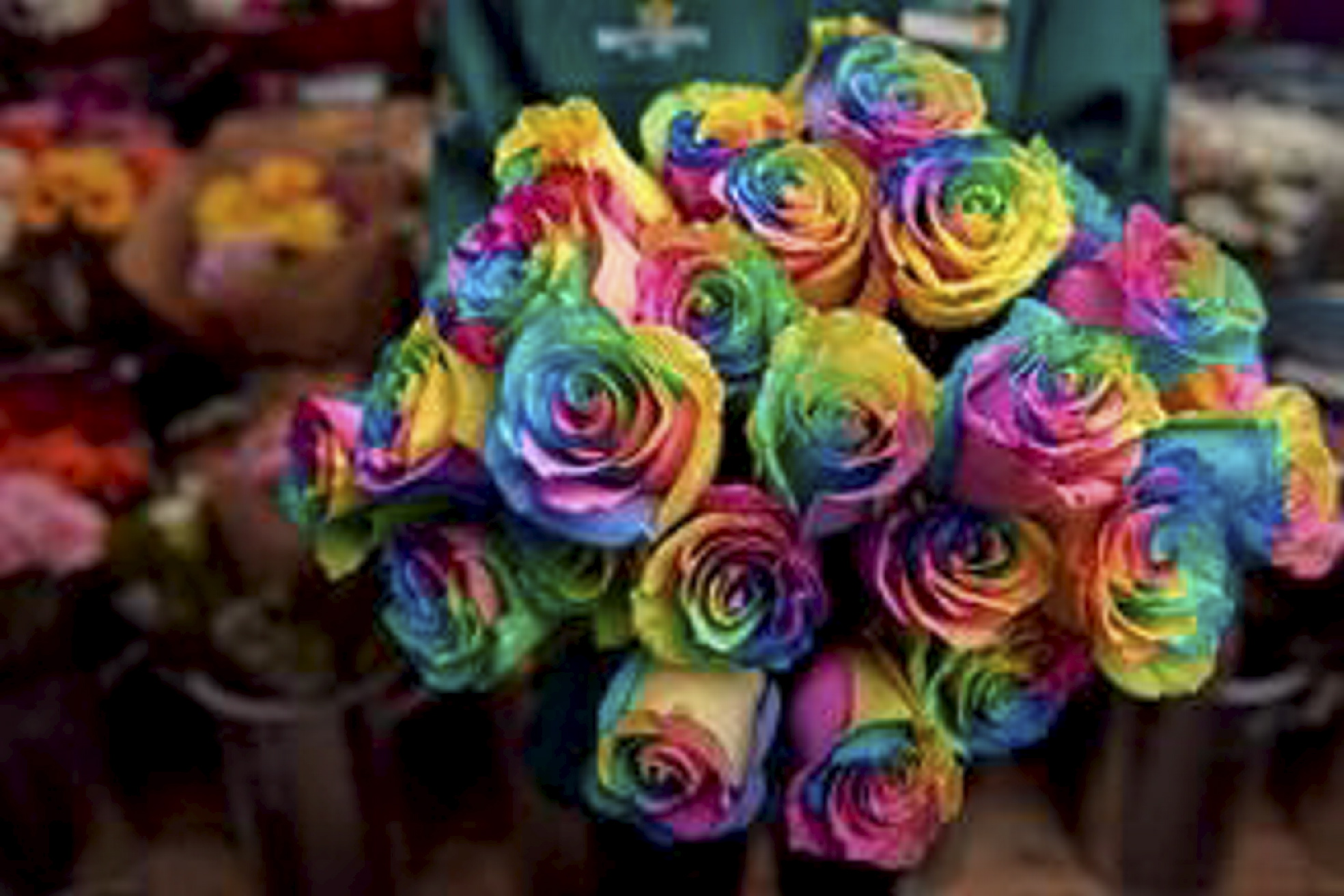 The rainbow roses