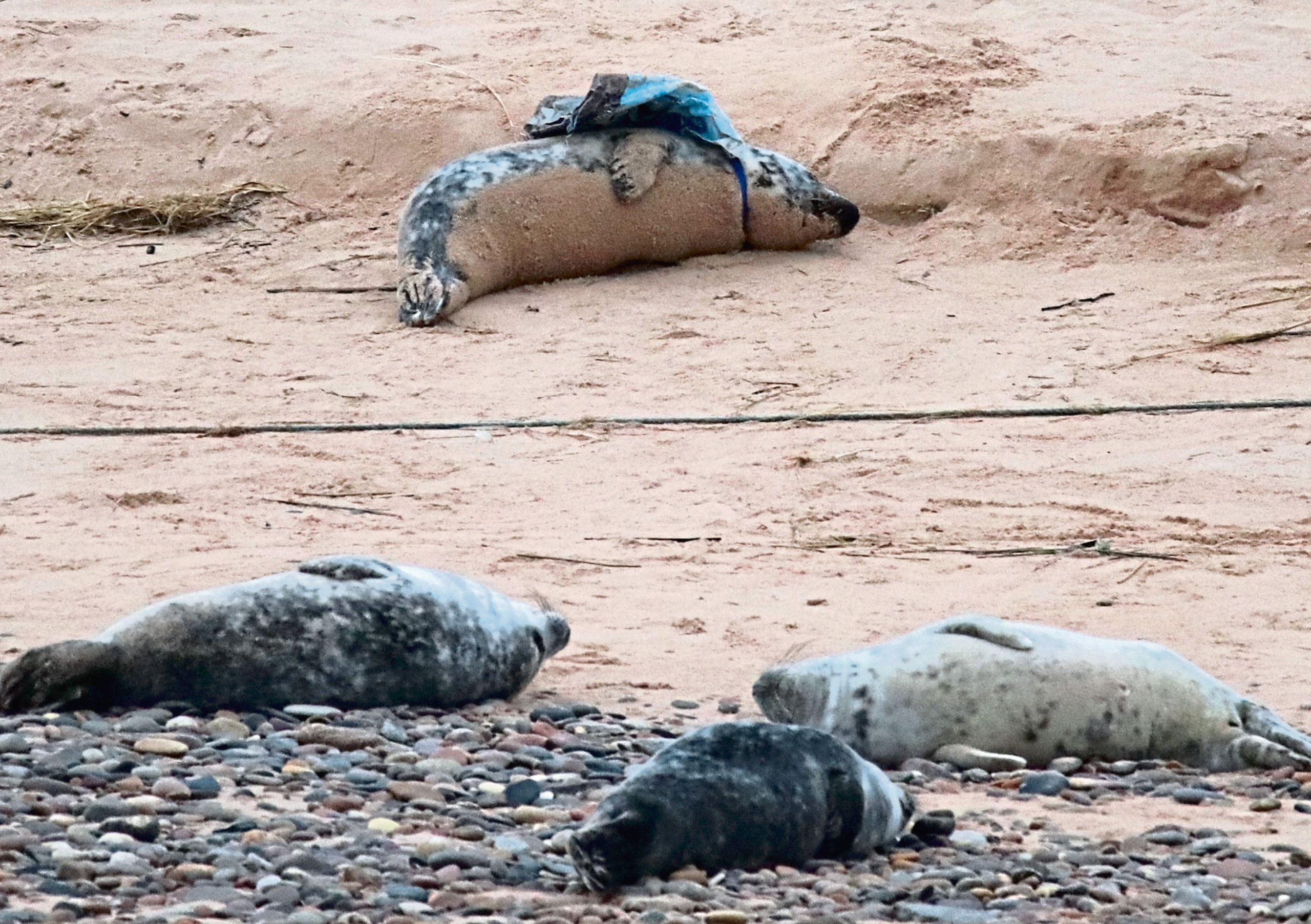 The seals had escaped by the time the teams arrived. Photo courtesy of Cameron Barclay.