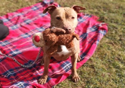 Naomi has been at the rehoming centre for 242 days
