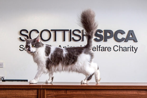 Scottish SCPA