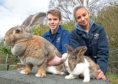 SRUC student Aiden Forrest with Thumper the Giant Flemish bunny