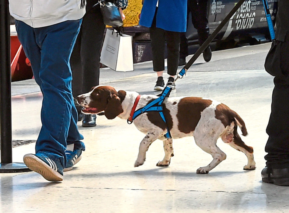 Buster the police sniffer dog in action at Aberdeen railway station