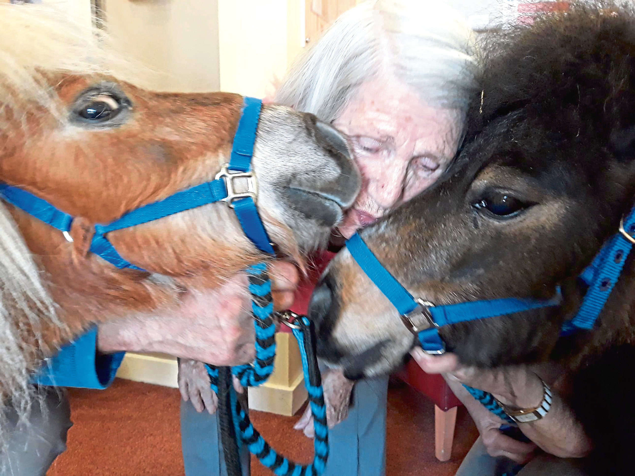 Group hug as a resident meets the ponies
