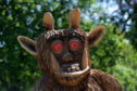 The Gruffalo in Hazlehead Park