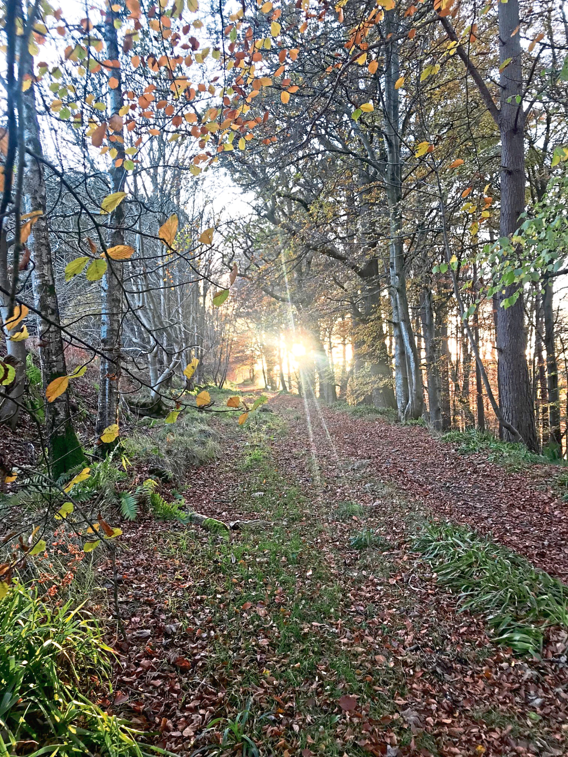 Old Kemnay road woodland near Inverurie, would be affected.