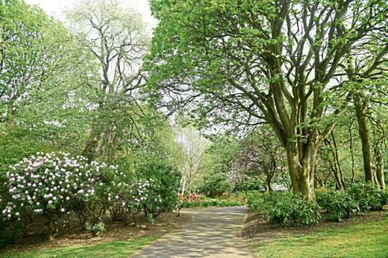 Aberdeenshire Council has announced a three-year programme which will focus on issues including tree protection and biodiversity.