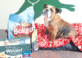 Winnie the bulldog with an emergency food parcel which can be collected from Mrs Murray's with a STAR voucher