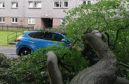 The tree appears to have landed on a parked car
