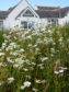 Forvie National Nature Reserve wildflower meadow. Credit: Scottish Natural Heritage
