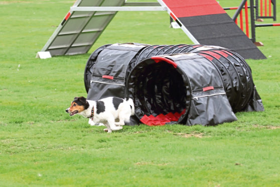The Devana Dogs Agility club will have a display at the first Cruden Bay dog
