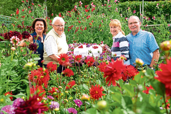 A petition has been launched to return Beechgrove Garden to a prime slot on BBC2