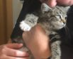 Police have named the kitten Gladys
