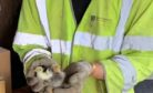 Engineer Sam Barnes with two of the chicks