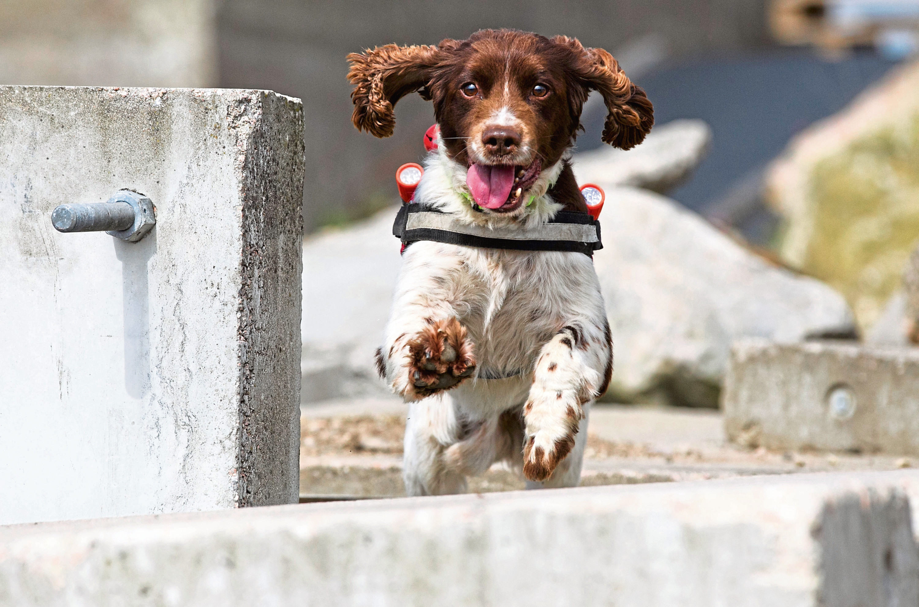 Diesel, the Fire Service's search and rescue dog
