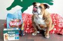Winnie the bulldog with an emergency food parcel