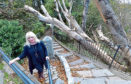 CR0015672 Pictured is Councillor Alison Alphonse who is concerned about a fallen tree between Brig O Balgownie and Balgownie Road. Alison is pictured with the tree. Pic by...............Chris Sumner Taken...............25/10/19