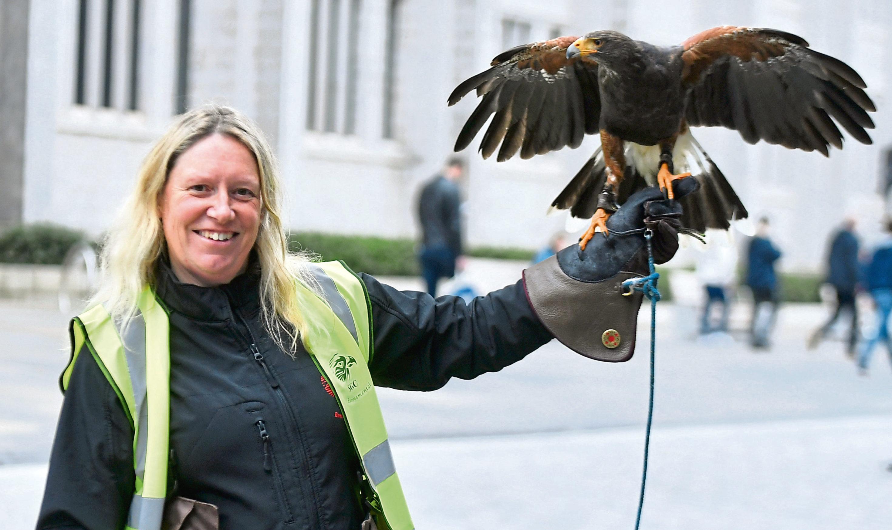 Sarah Calderwood with Saffron the Harris Hawk