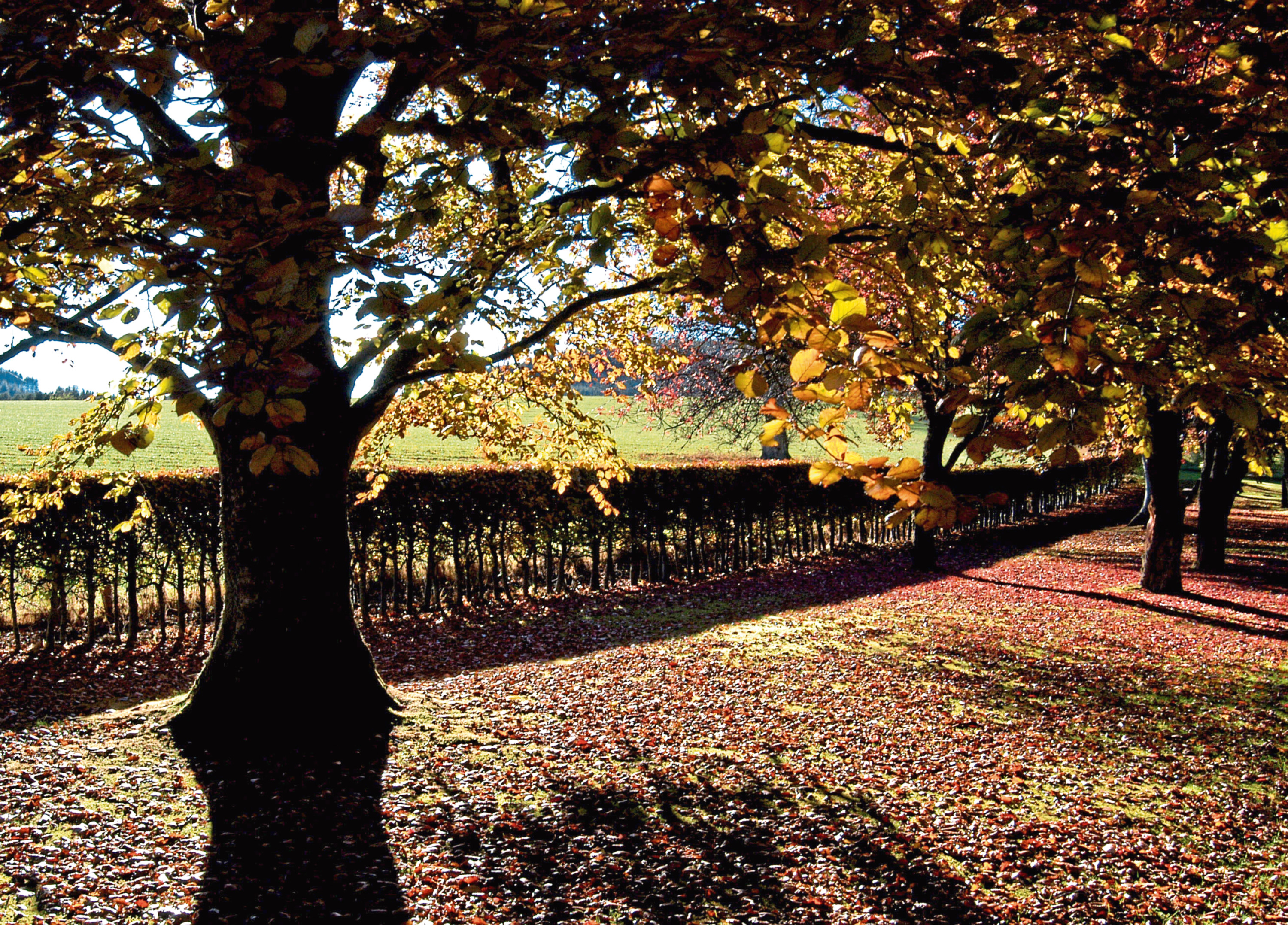Landowners across Aberdeenshire are being encouraged to inspect trees