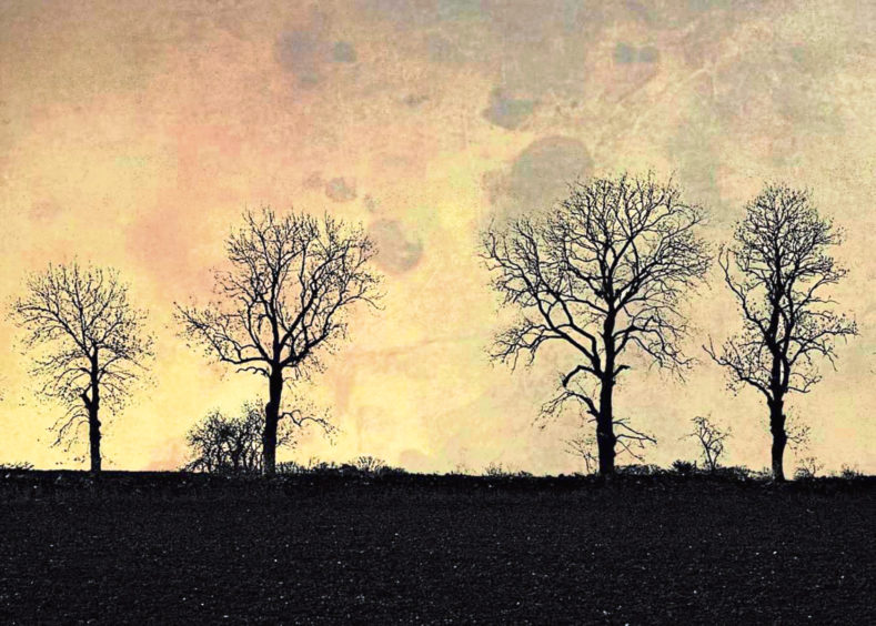 Trees on the skyline, photographed by Emma Garvie
