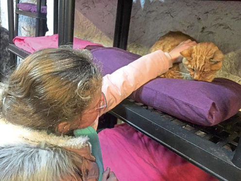 Sienna Falconer is a big fan of Willows Animal Sanctuary