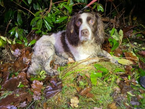 The dog was found wandering on Haddo Drive.