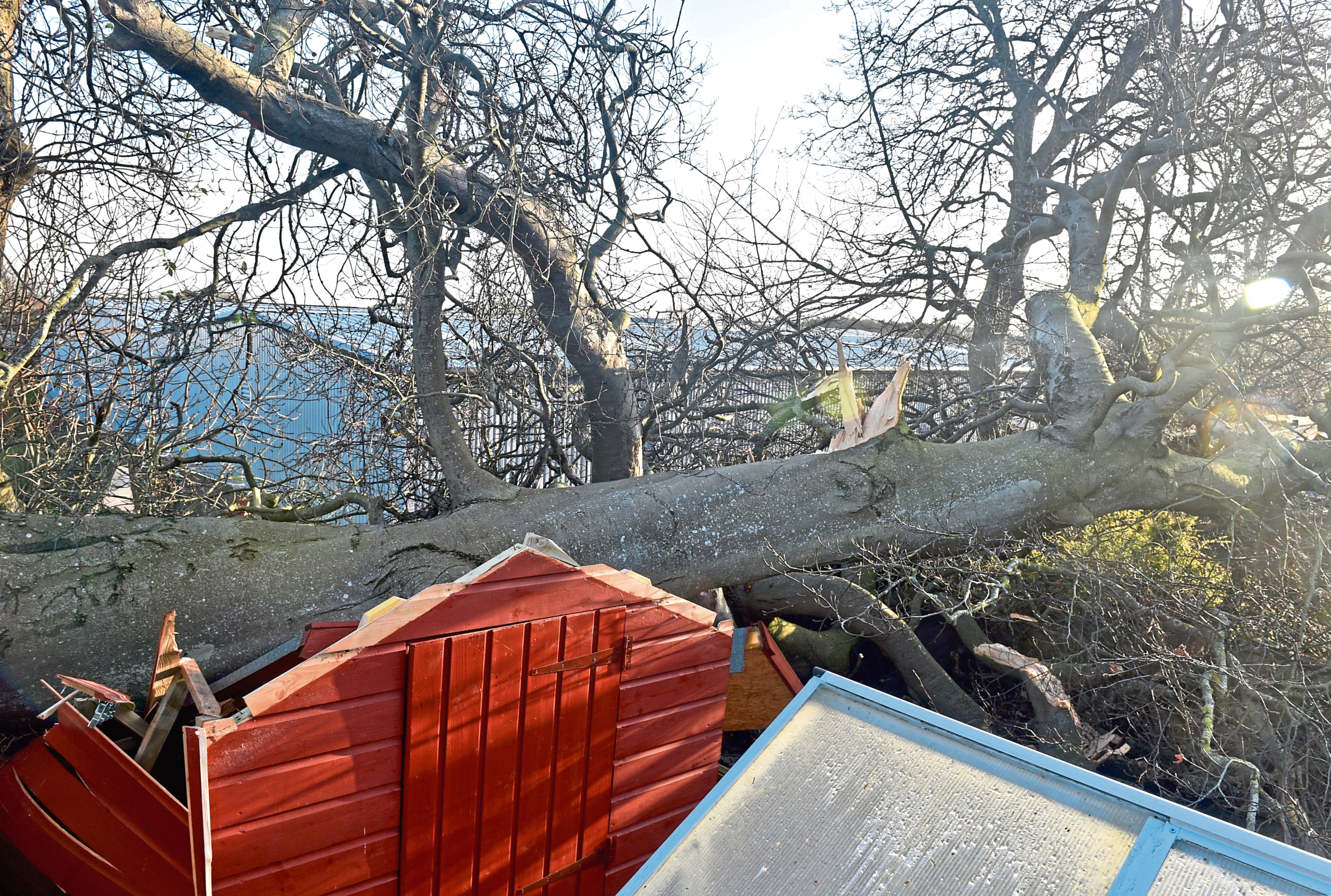 The fallen tree has crashed through sheds and other property in Greenbrae Gardens North in Bridge of Don