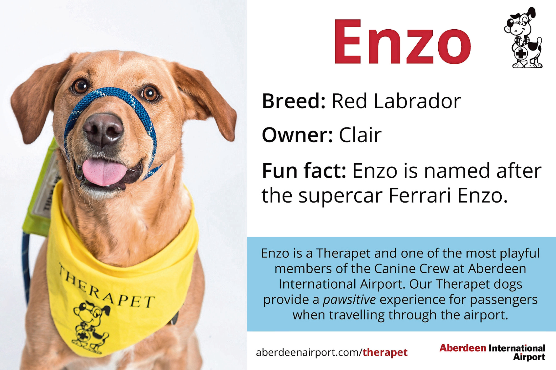 Enzo will be among the therapets at Aberdeen International Airport tomorrow