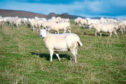 Dog owners have been warned over sheep-worrying.