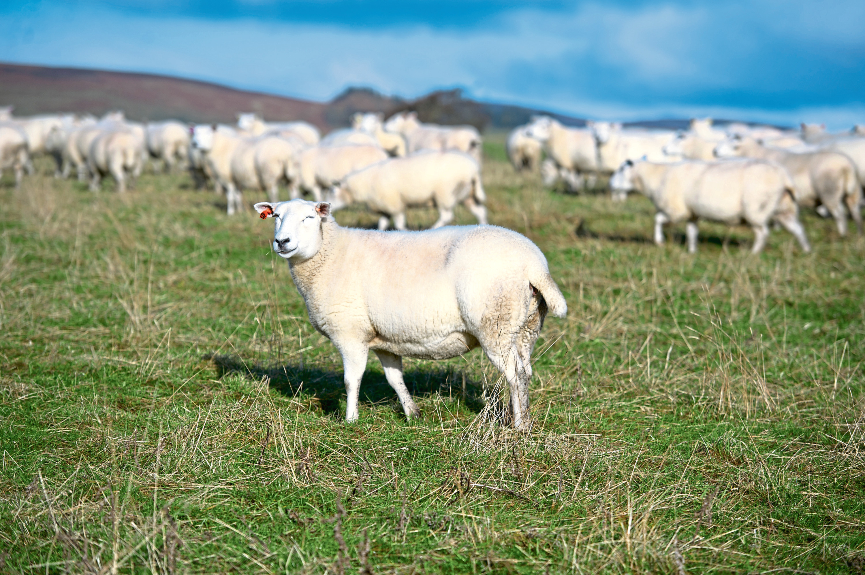 Peter Chapman praised the opportunity for more power for police officers around livestock worrying
