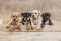 Puppy training classes will be held in Peterhead