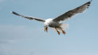 """Vicious seagulls and the """"smell of a dead mouse"""" are some reasons behind pest control visits to north-east schools"""