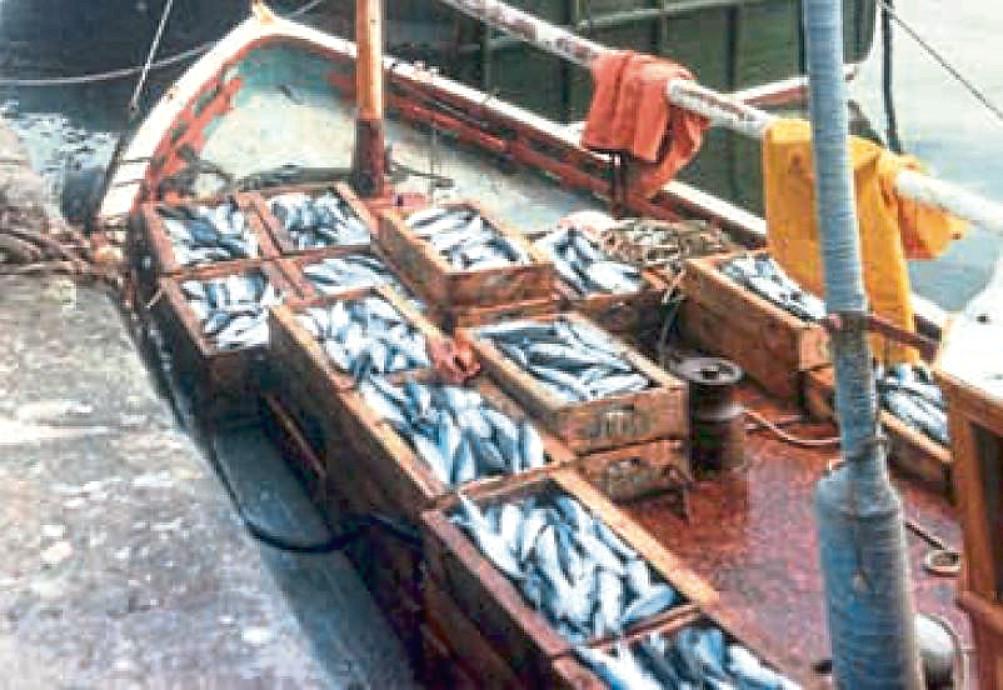 A good catch of mackerel aboard Gracious