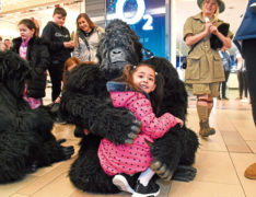 A wild gorilla hugging a little girl during Union Square's family fun day