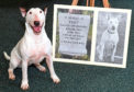 Bull terrier Billie-Jean was at the ceremony to represent Peggy the mascot of the 2nd Battalion Gordon Highlanders