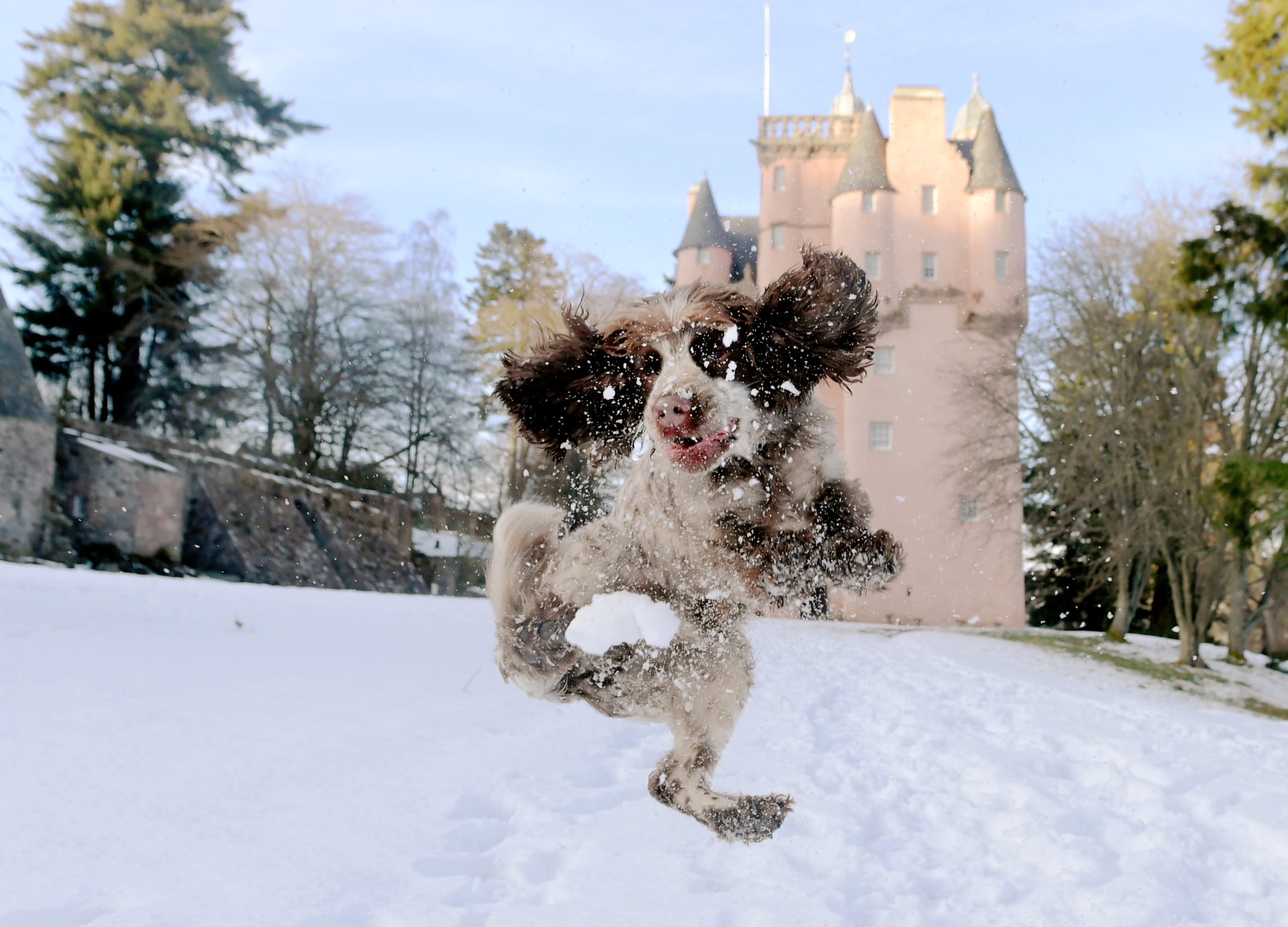 Bobby at Craigievar Castle. Picture by Kath Flannery
