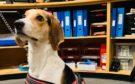 The dog was found near St Machar Academy.