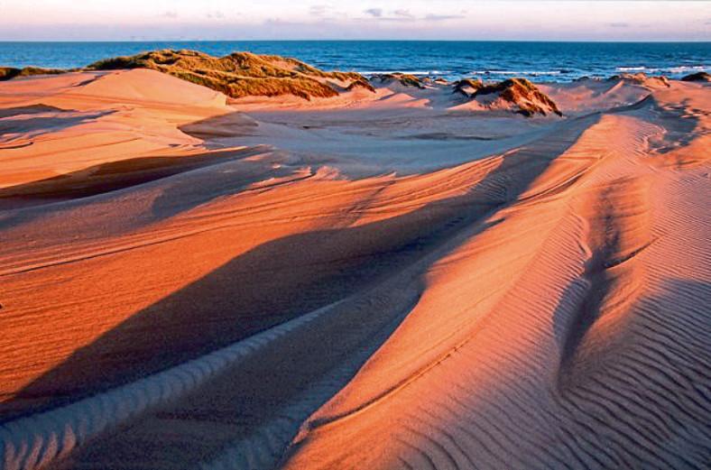 Forvie National Nature Reserve
