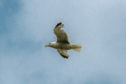 One council has warned seagulls could become more aggressive