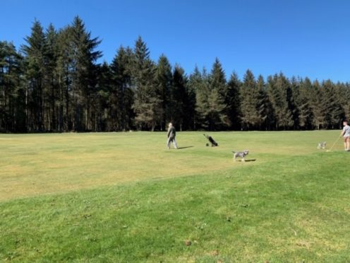 Golf has restarted, but competitive play is not yet allowed.