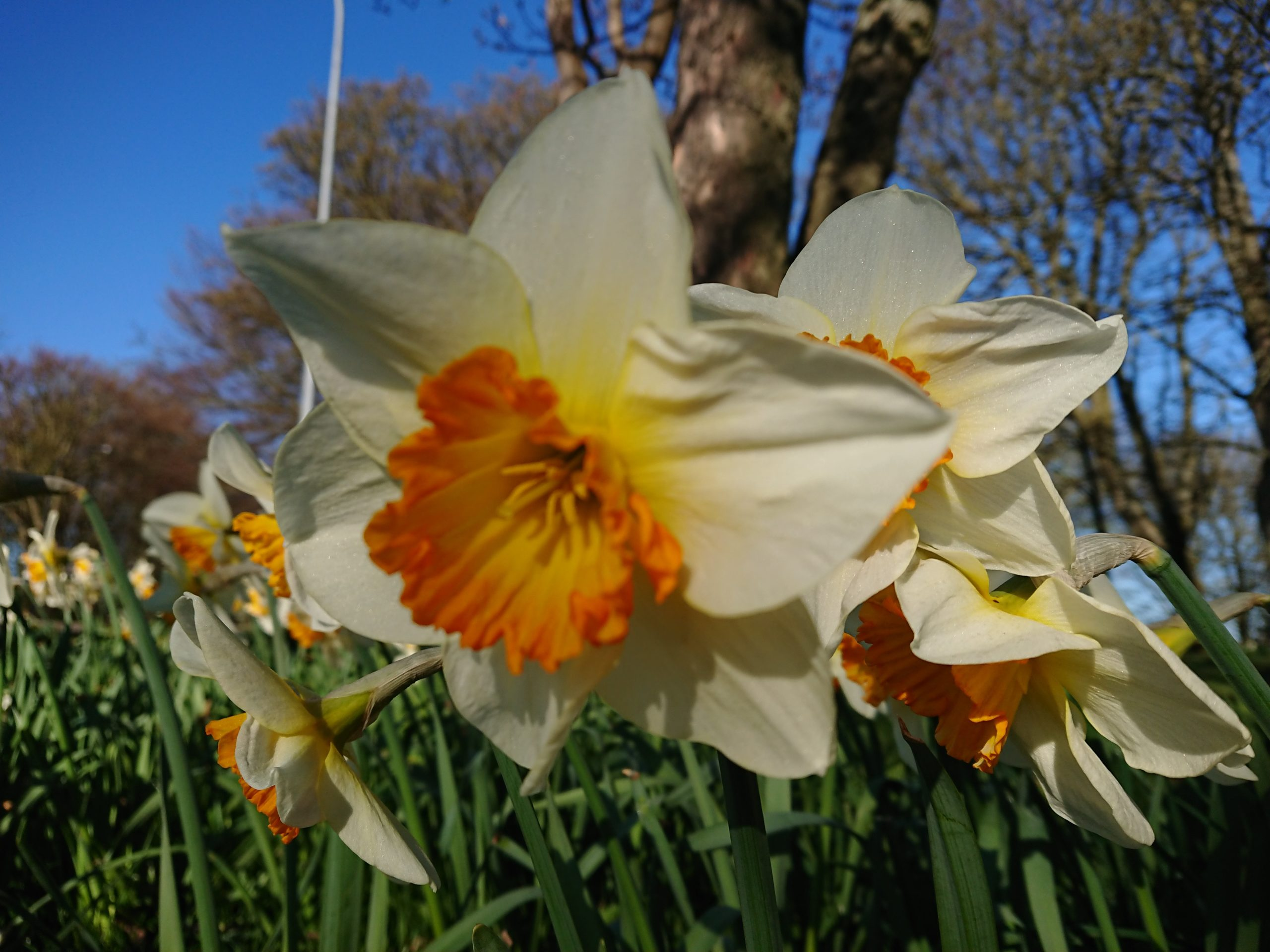 Aberdeen residents are encouraged to submit pictures for a celebration of Aberdeen in Bloom.