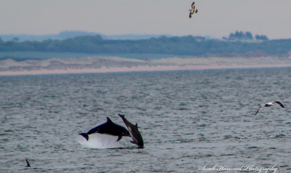 Sarah Harwood and her son Ryan have taken pictures of dolphins